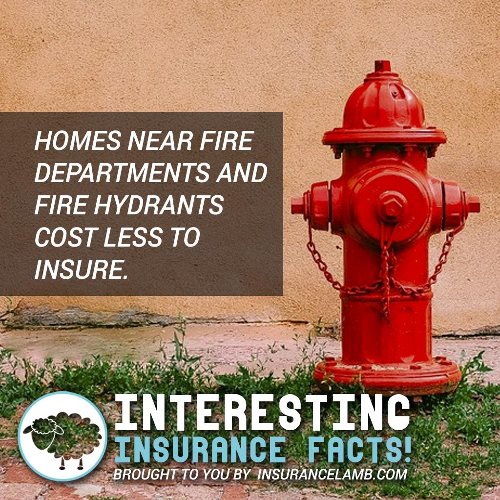 Interesting Insurance Facts